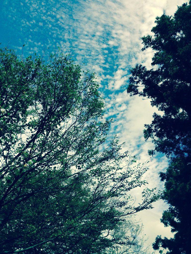 Fir Pine Tree via pikwizard.com